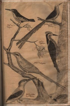Collection of Bird Drawings.